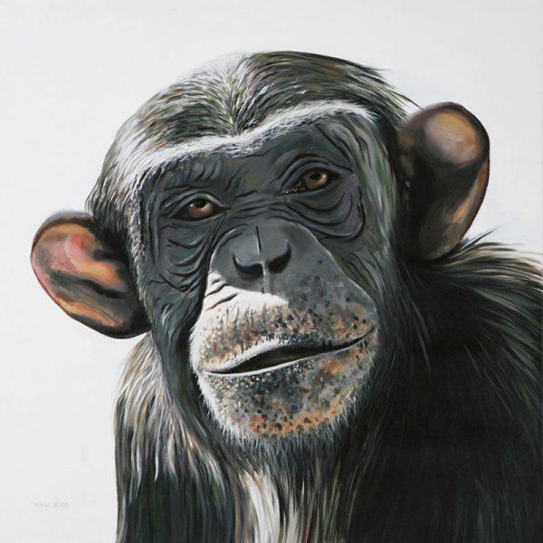 Chimpanze2