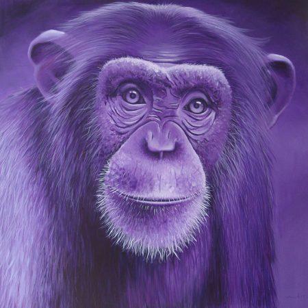 Chimpanzé #p266