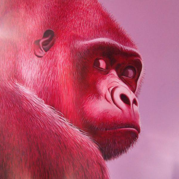 Gorille#P185