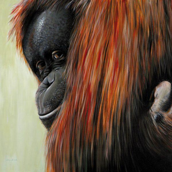 OrangOutan2