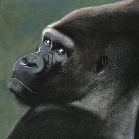 gorille1