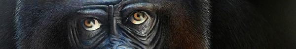 tetiere_gorille