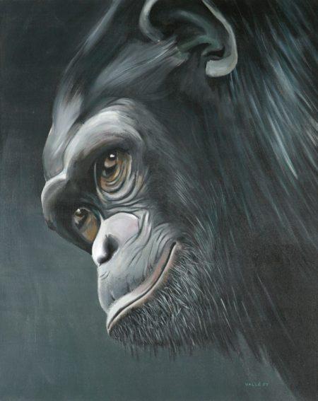 chimpanze1