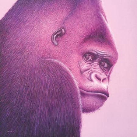 gorille#P251_site